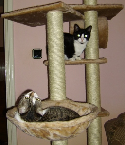 Pisici in casuta lor